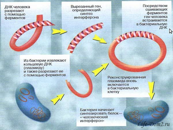 Интересные факты об иммунитете
