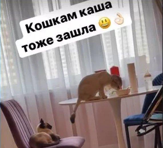 Саша Черно в отсутствие Репсимы Оганесовны кормит сына и котов из одной миски
